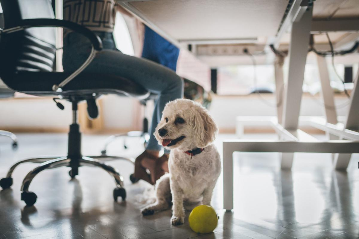Judie Amyot: Pets in the workplace
