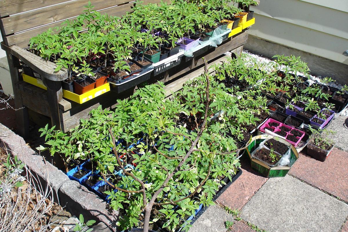 Elaine Sanders: Dreaming of a summer harvest?