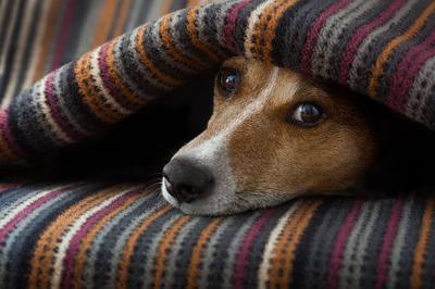 Pet talk: Stay warm this winter