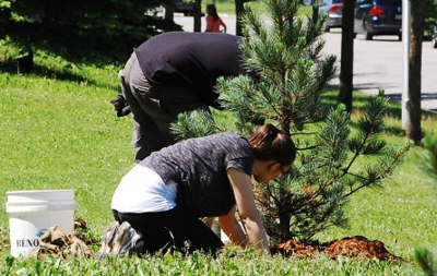 Laval executive committee funds tree planting, youth activities