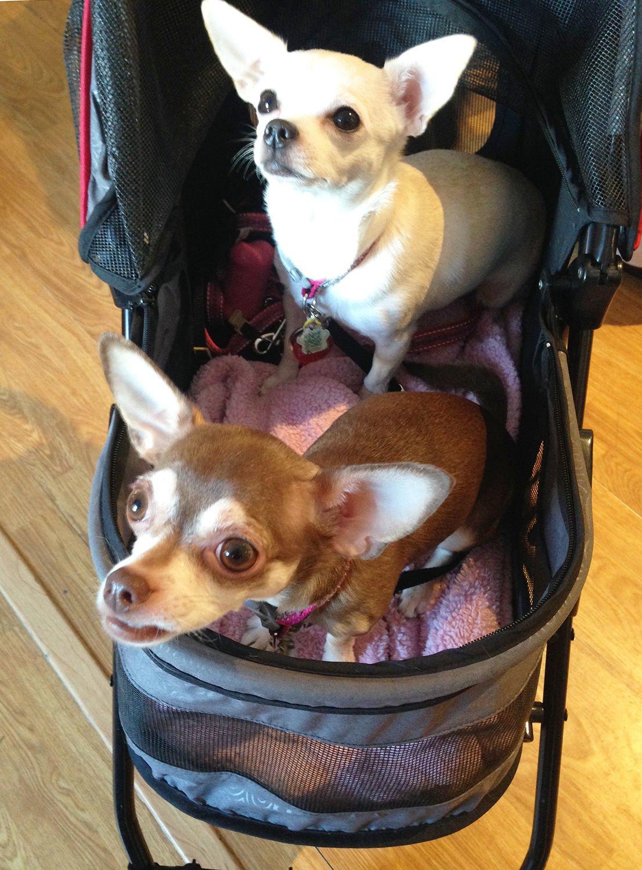 Judie Amyot: Ay, Chihuahua!