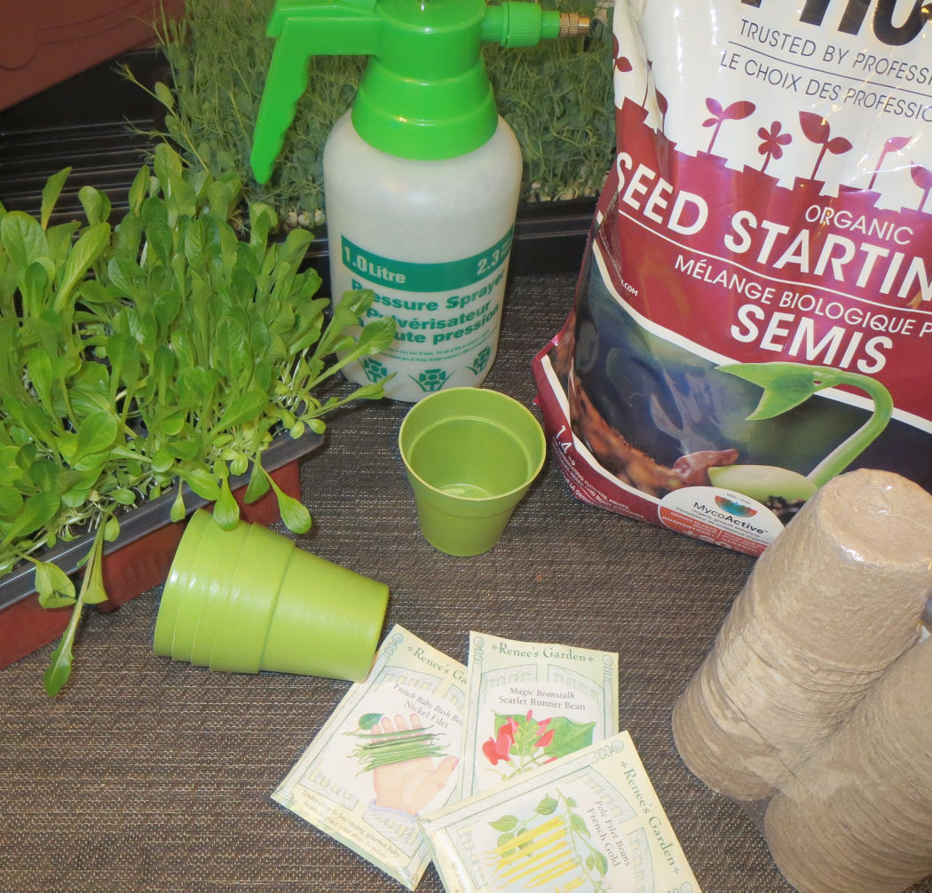 Avoid these common pitfalls when starting plants from seed indoors