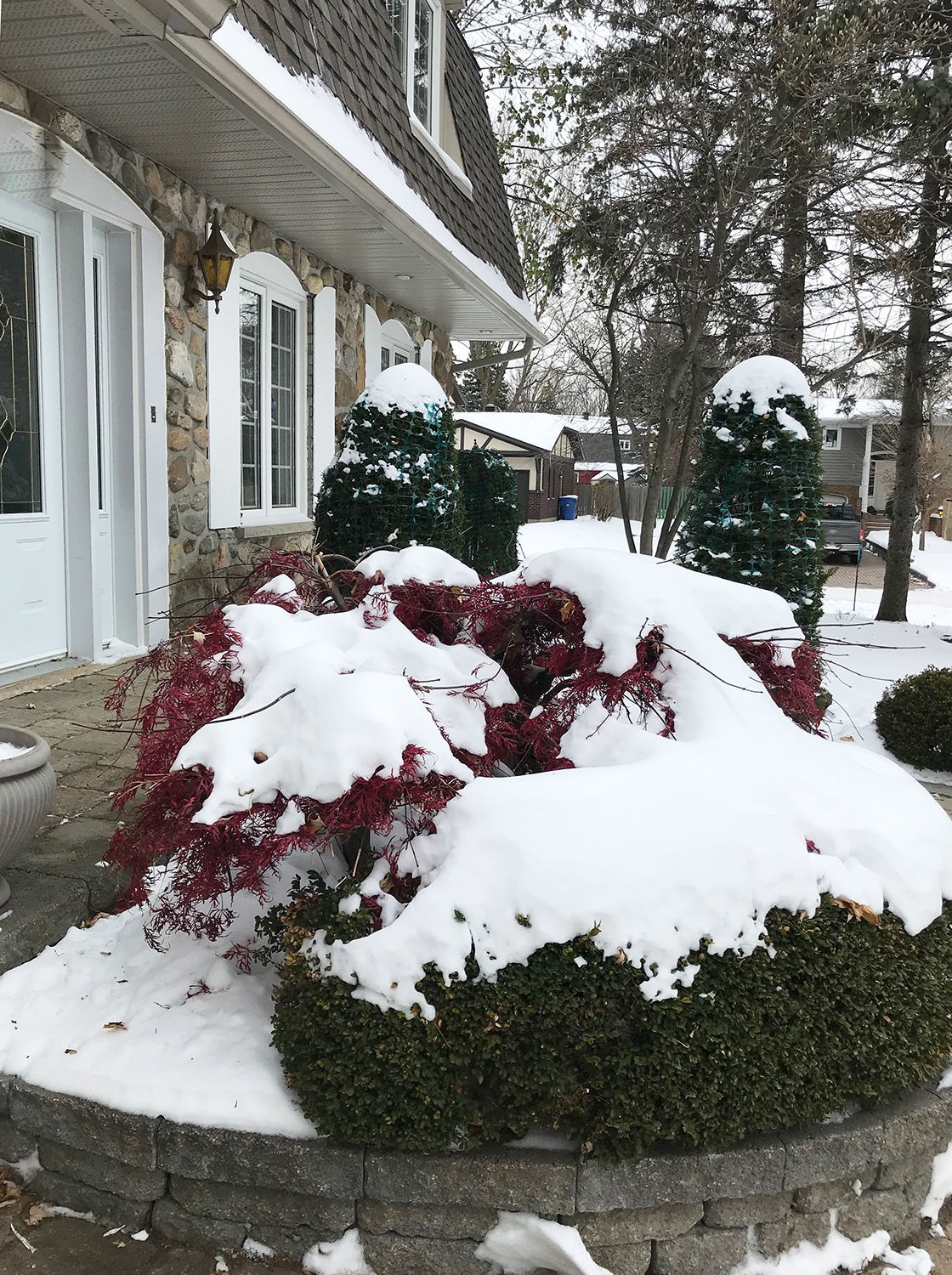 Elaine Sanders: It's not too late to protect your plants for winter