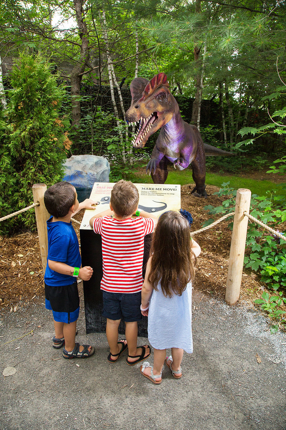 Lions, and even dinosaurs, roar within the maze of wild animals at the Zoo de Granby