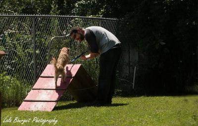 Pet Talk: Working with a professional dog trainer