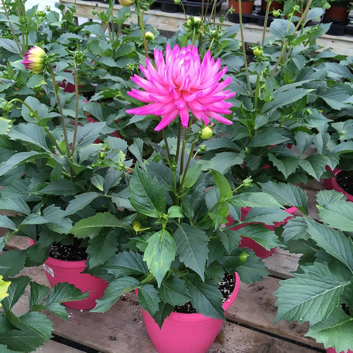 Elaine Sanders: Get a jump on the gardening season
