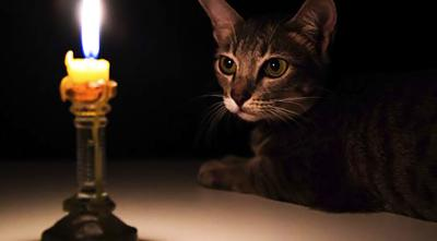 National Pet Fire Safety Day is July 15: Consider your furry friends when preparing for fire emergencies