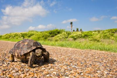 Me, My Business & I Series: Slow and steady wins the race