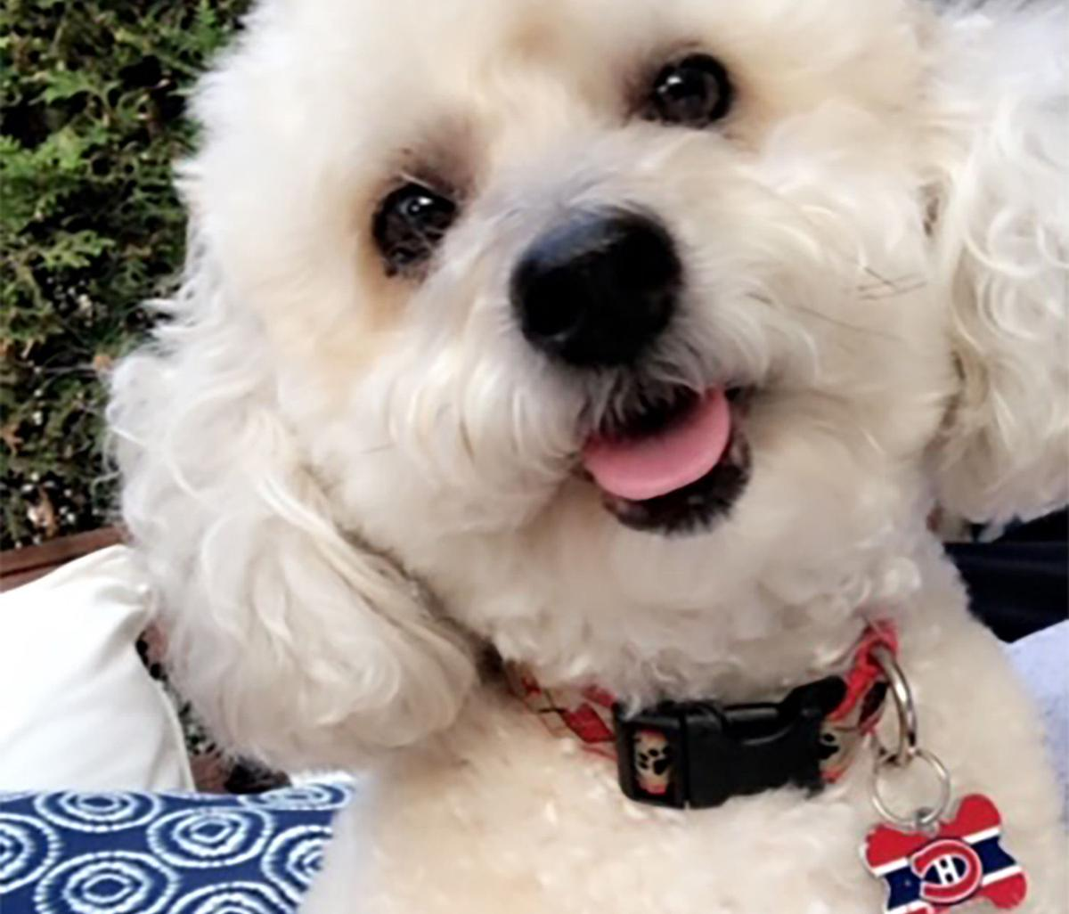 Suzanne Reisler Litwin: Understand This — I'm not a crazy dog person!