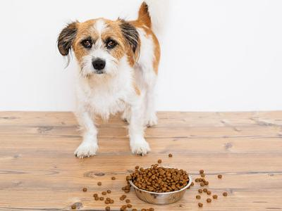 Pet Talk: Pet food allergies versus intolerances