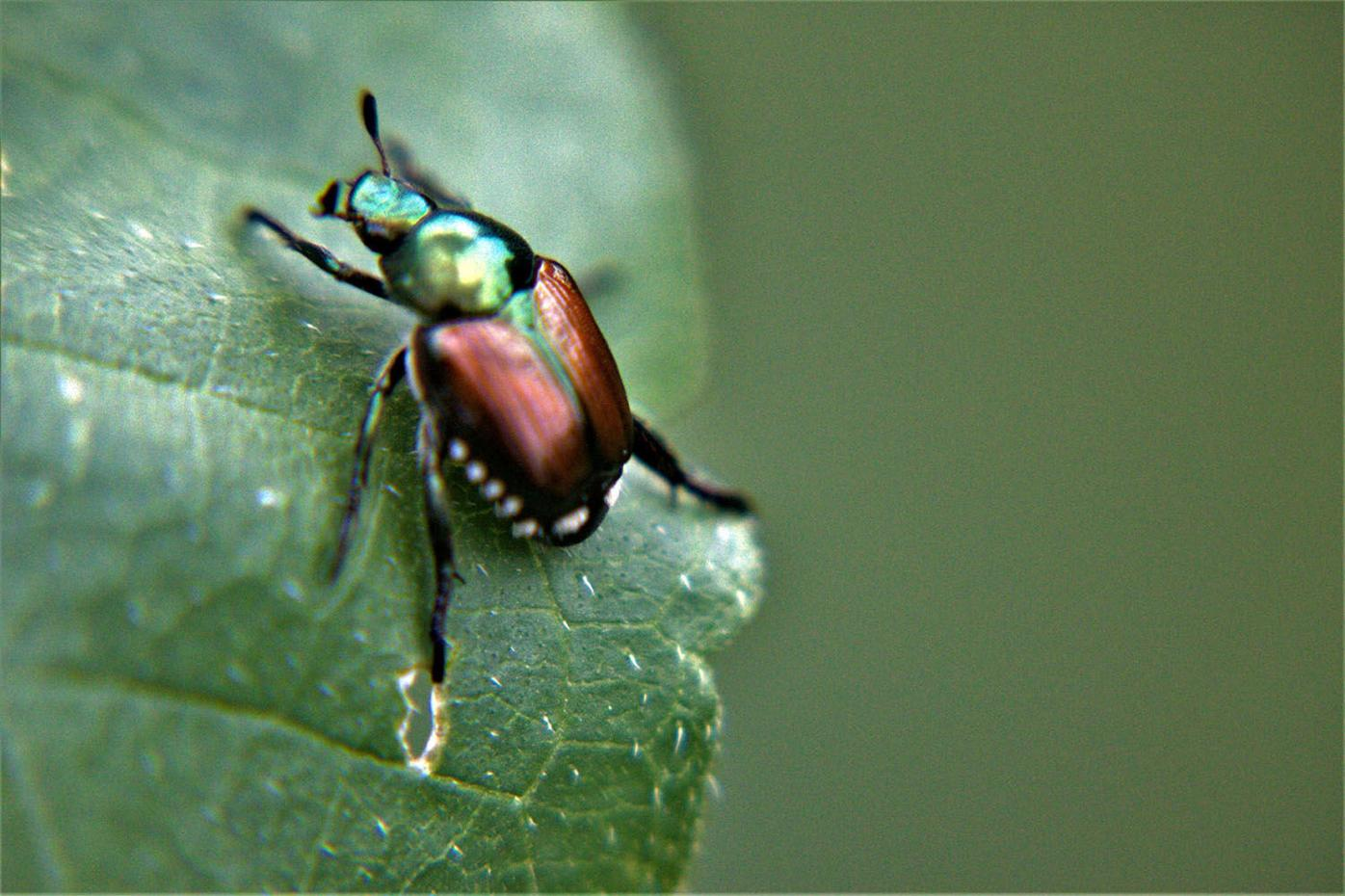 Five common garden invaders and how to control them