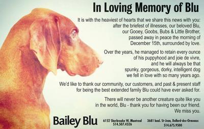 Pet Talk: In Loving Memory of Blu