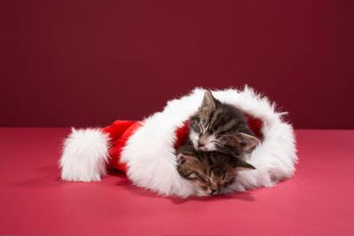 Best of 2017: Pet talk: Having Happy and Safe Holidays