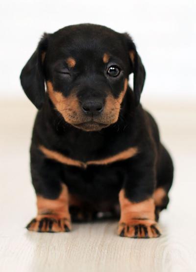 Animal bylaw update
