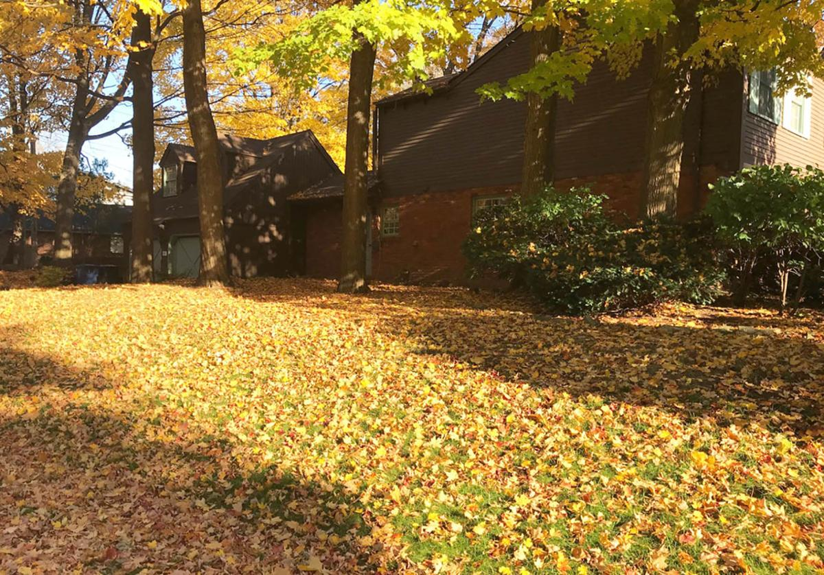 Elaine Sanders: Learn to love your fallen leaves to benefit your lawn and garden