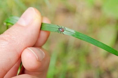Be vigilant for ticks this summer, warns the Nature Conservancy of Canada