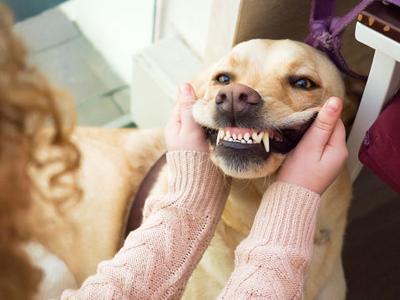 Pet Talk: Dental health