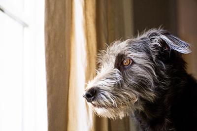 Pet Talk: Calming an anxious pet