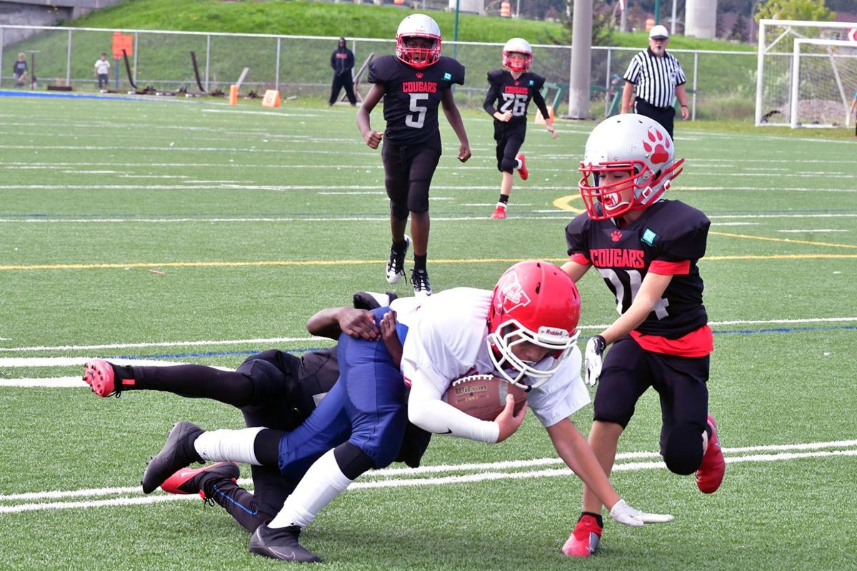 Cougars' campaign remains perfect in atom through bantam play