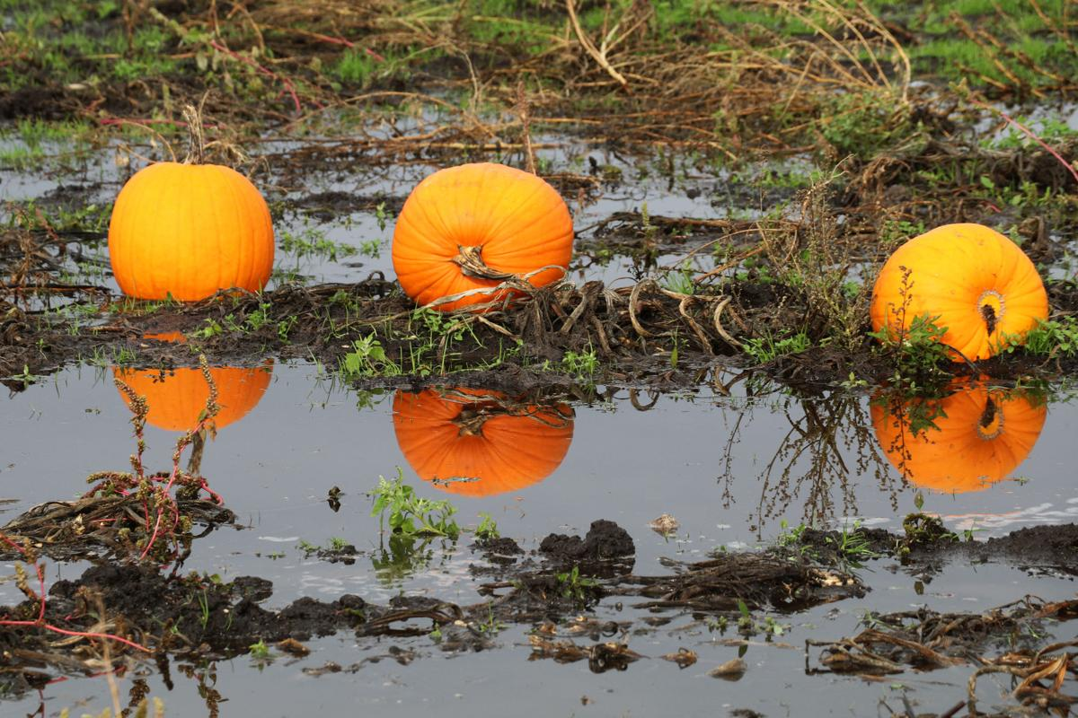 Strong fall storm forecast to dampen Halloween spirits
