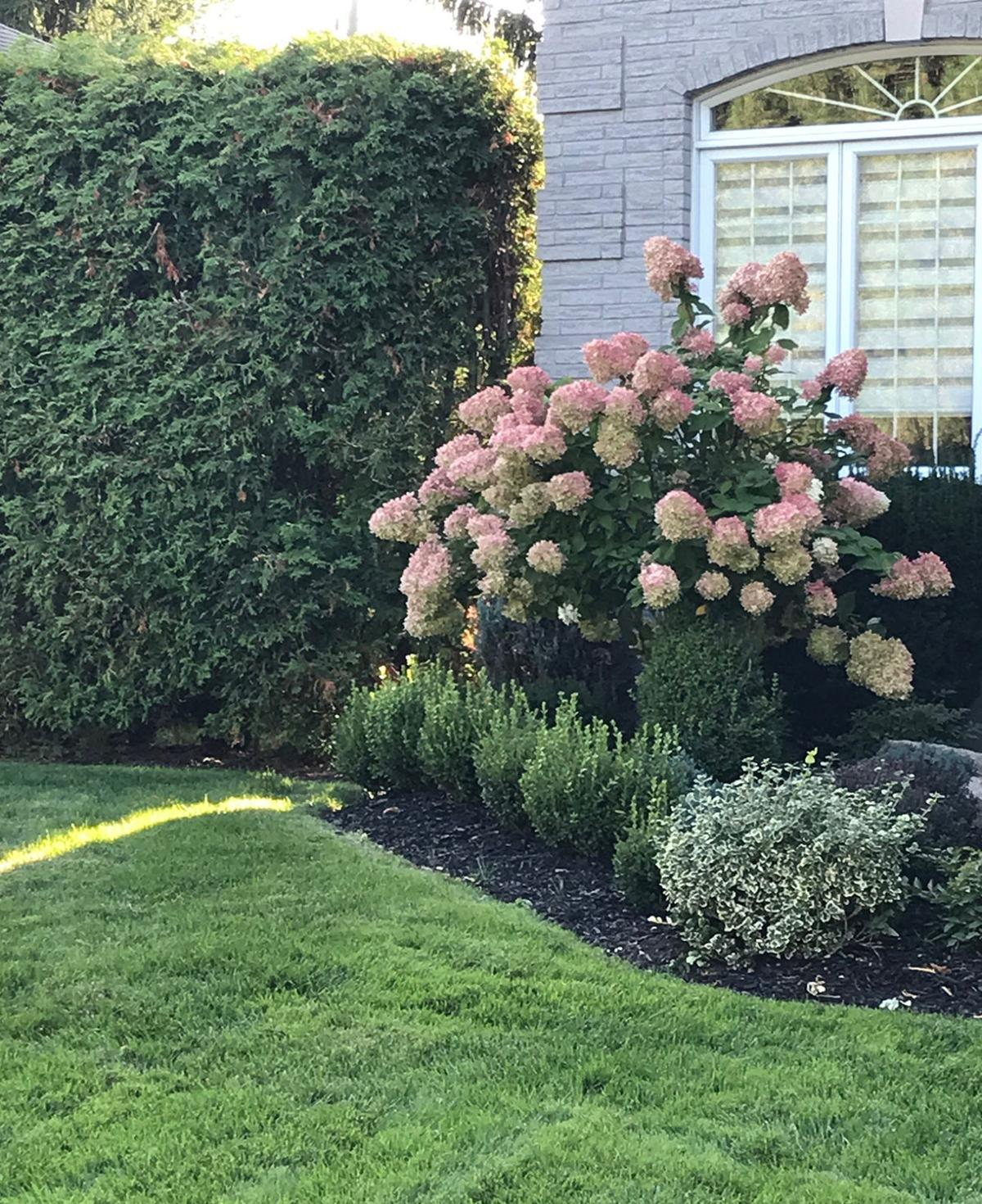 Elaine Sanders: Welcome fall and get back to gardening now