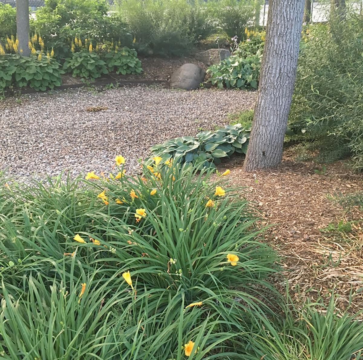 Suburban Lawn Garden: Elaine Sanders: Reduce Your Lawn And Go Green Another Way