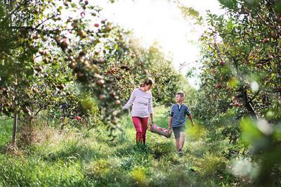 Melany Of MList: 3 Best apple picking places