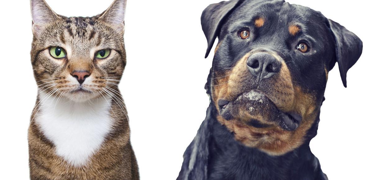 Pet Talk: Picky Eaters