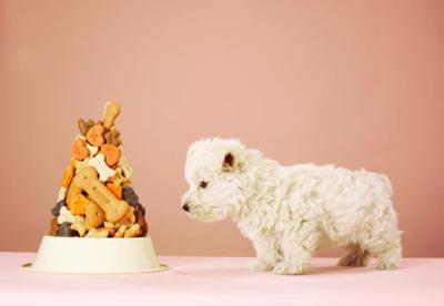 Healthy Treat Alternatives for Dogs