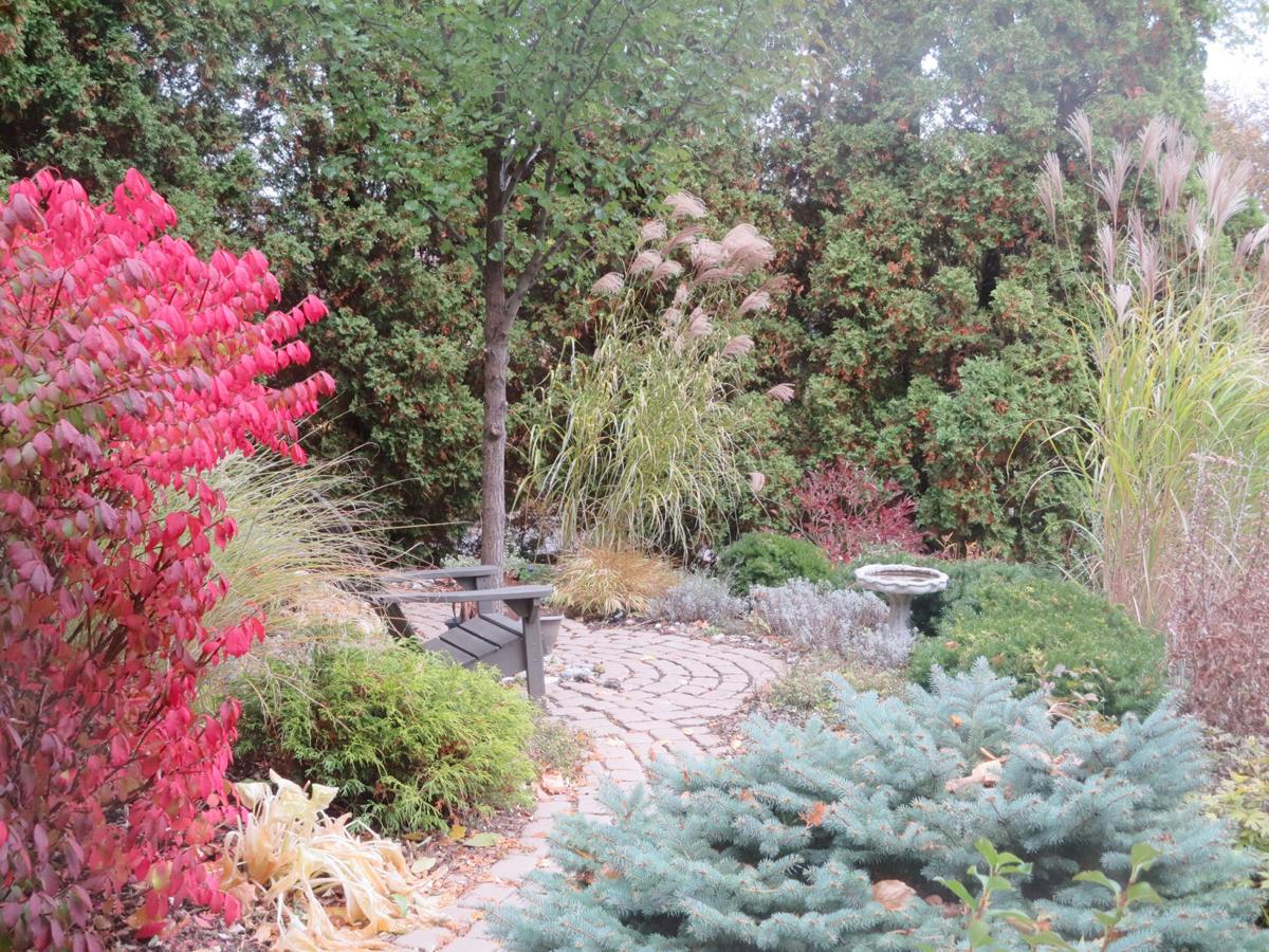 Why every garden needs conifers