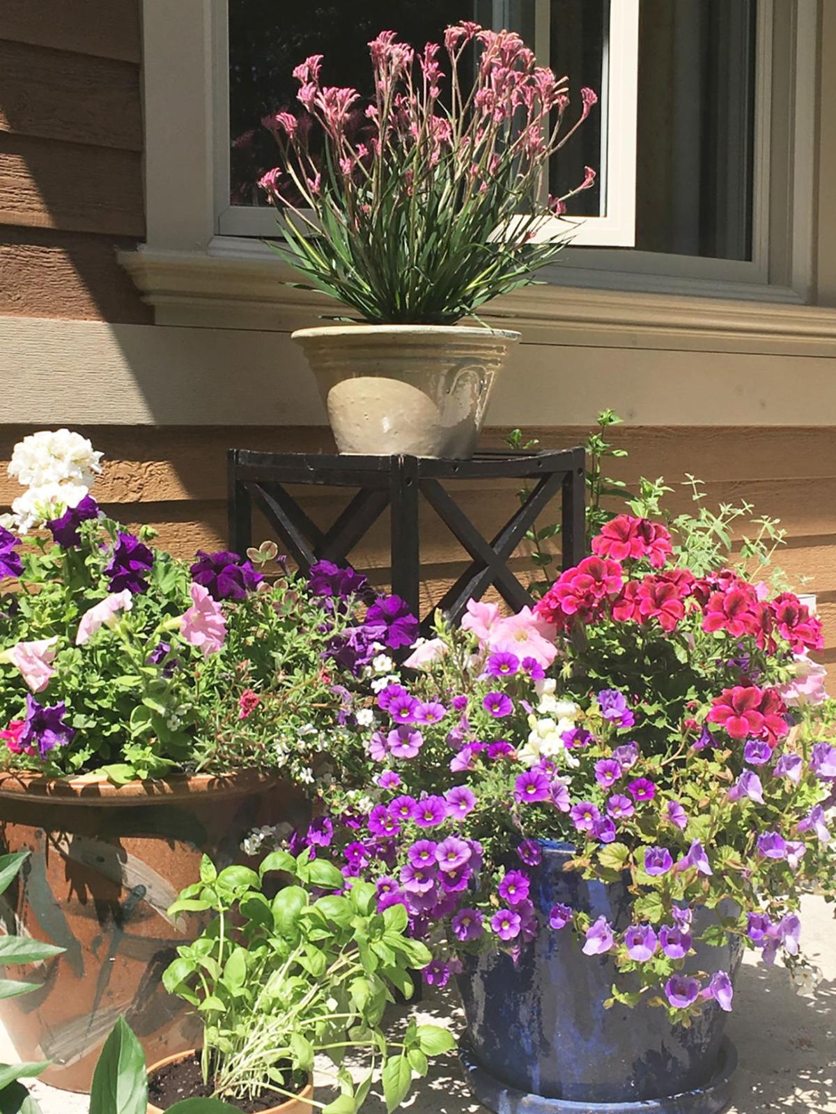 Elaine Sanders: Three creative container ideas for growing on balconies