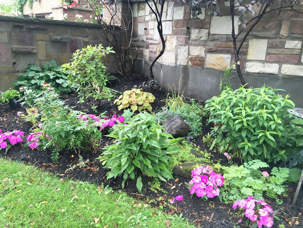 Elaine Sanders: Choosing the right annuals for your pots and borders