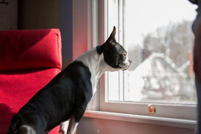 Pet Talk: Leaving pets alone at home