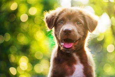 Pet Talk: Summer pet care