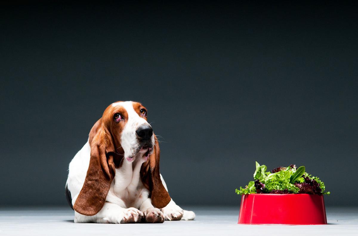 Judie Amyot: Beef or broccoli?