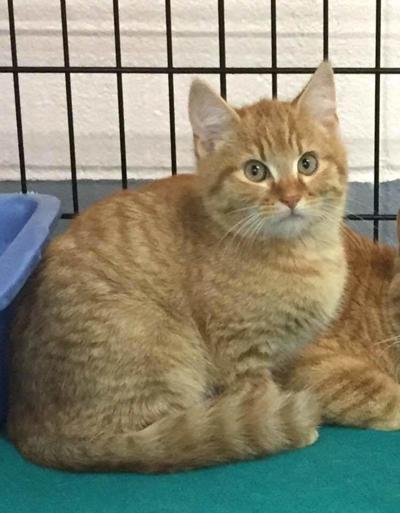 Heber Spring Humane Society Adoptable Pet of the Week