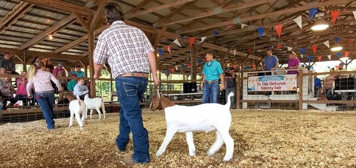 Goat Judging at the 2021 Cleburne County Fair