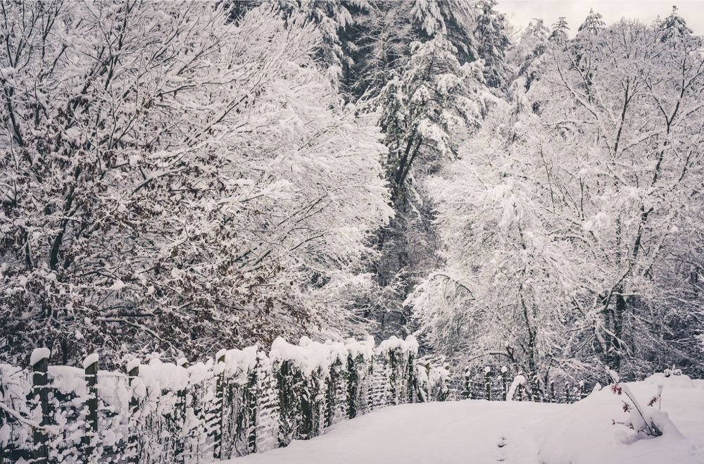 Snow day in Sylva