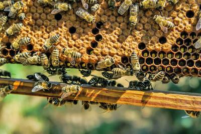 Honey and beeswax