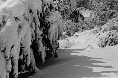 blizzard1993_010.jpg