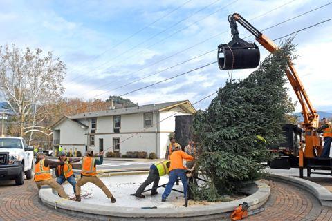 Sylva Christmas tree goes up