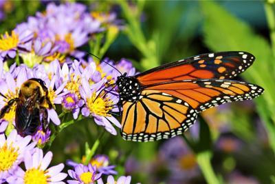 Local pollinators