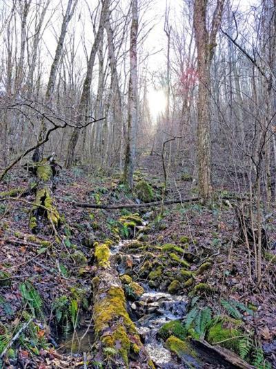 tree id walk