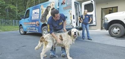 Animal rescue from hoarding