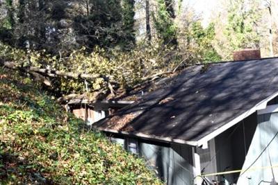 tree on house Zeta