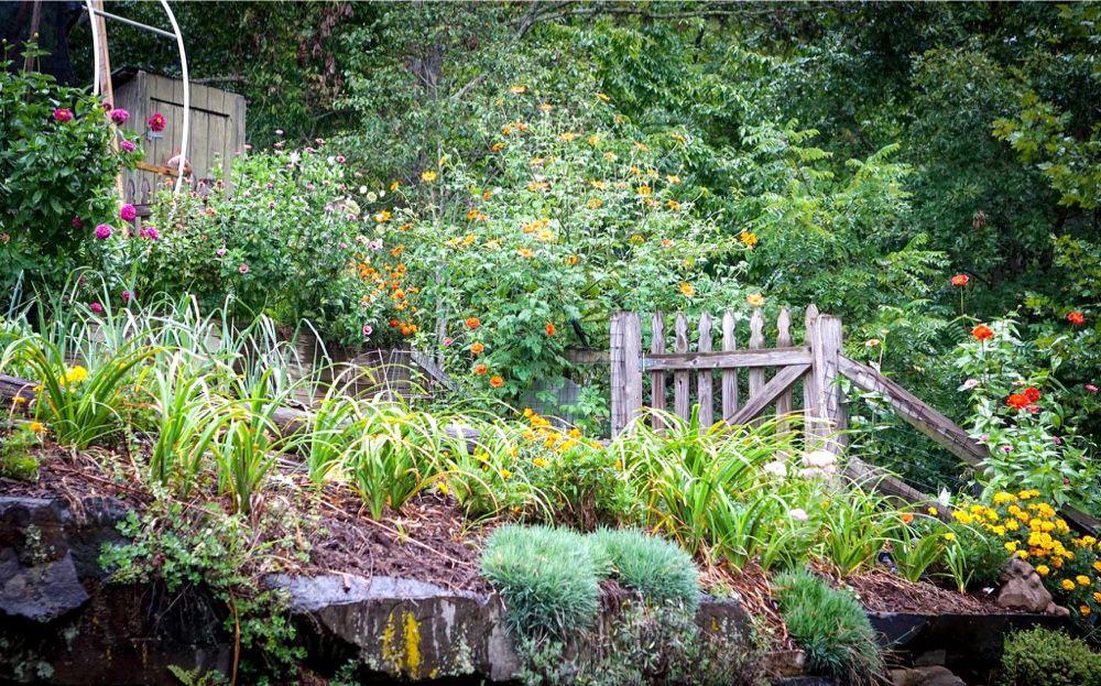 Late summer, fall garden