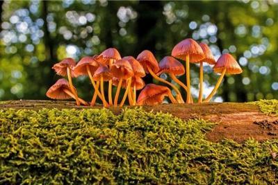 mushrooms on tree dead