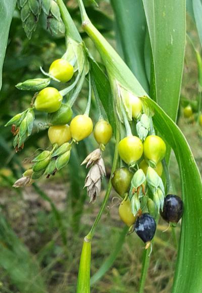 Renea Winchester Heritage Seeds