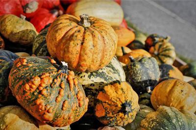 Pumpkins Basham