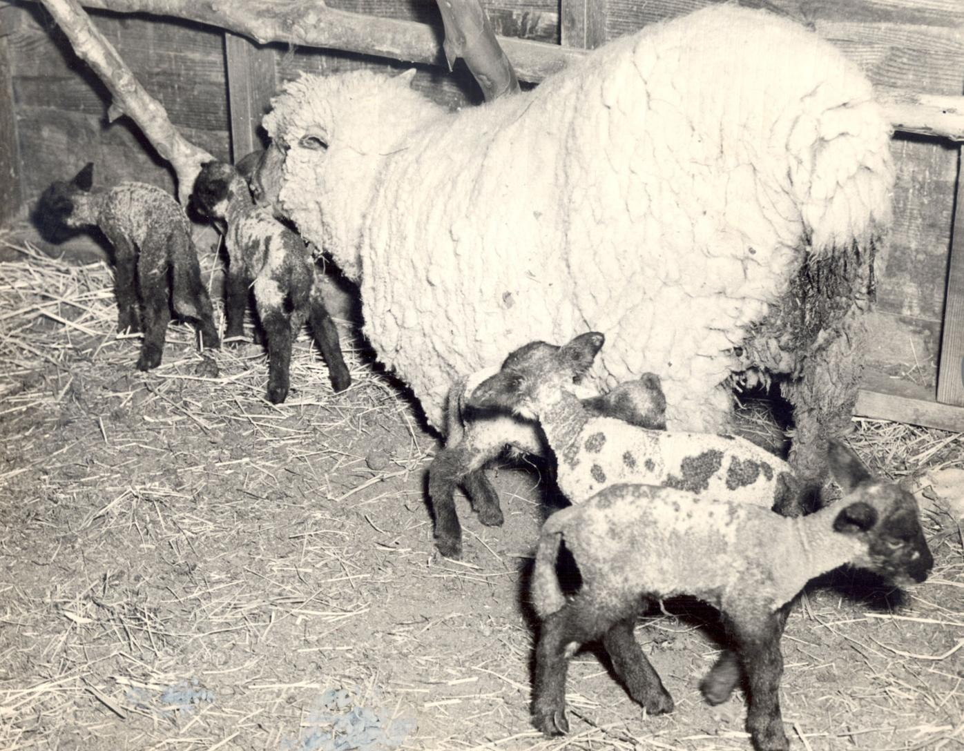 lamb_tt050121dayinhistory_p1